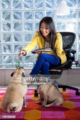 A woman in an office space with two pug dogs : Stock Photo