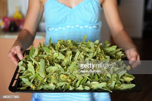Woman in blue holding tray of dried linden flowers : Stock Photo