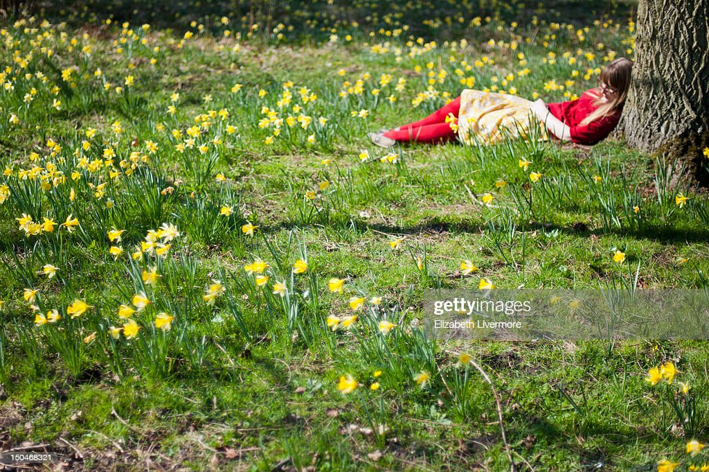 Woman in daffodils : Stock Photo