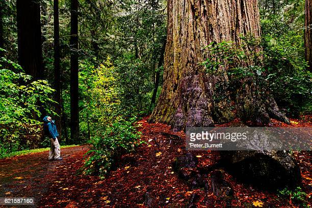 Woman in Jedediah Smith Redwoods State Park, California