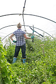 Woman in overgrown poly tunnel holding sheirs