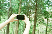 Woman in park taking photograph with smartphone