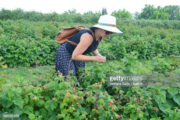 Woman In Sunglasses Looking At Plants On Agricultural Field