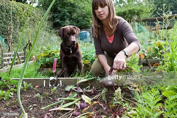 Donna in orto con animale domestico Labrador Dog