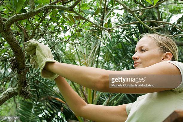 Woman inspecting tree