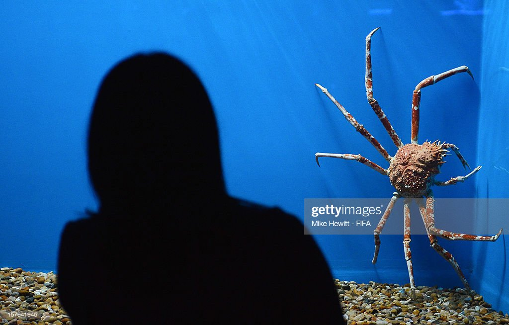 A woman inspects a japanese spider crab at the Tokyo SkyTree Aquarium ahead of the FIFA Club World Cup in Tokyo on December 8, 2012 in Yokohama, Japan.