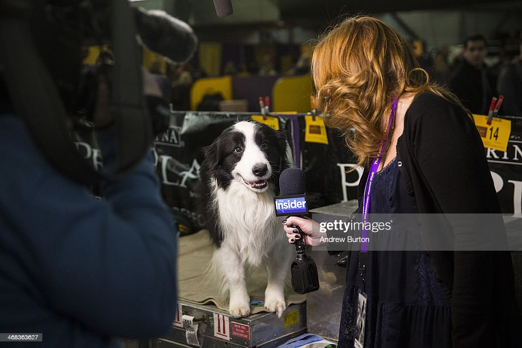 A woman interviews a dog during the 138th annual Westminster Dog Show at the Piers 92/94 on February 10, 2014 in New York City. The annual dog show showcases the best dogs from around world for the next two days in New York.