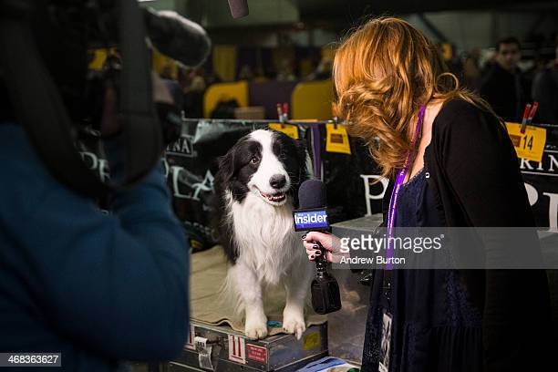 A woman interviews a dog during the 138th annual Westminster Dog Show at the Piers 92/94 on February 10 2014 in New York City The annual dog show...