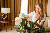 Mature woman is dusting rubber tree in her apartment