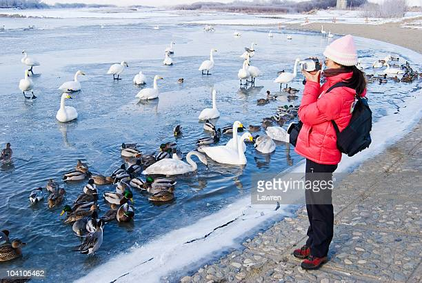Woman is on vacation and filming swans and ducks