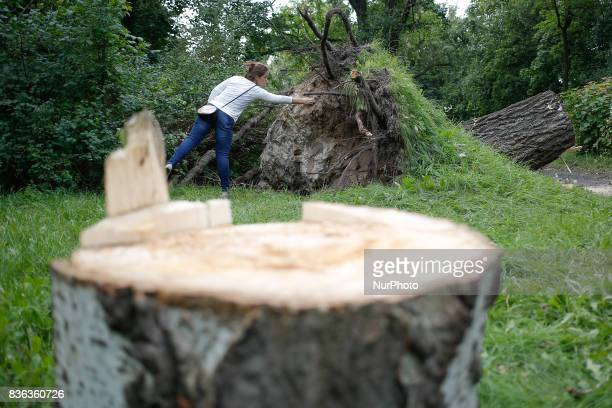 A woman is seen looking at an uprooted tree in a park on 20 August 2017 Recent storms have caused severe damage to over 110 thousand acres in the...