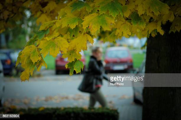 A woman is seen walking past a maple tree while on the phone in Bydgoszcz Poland on 19 October 2017
