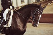 woman jockey with his horse in uniform for Dressage. close up