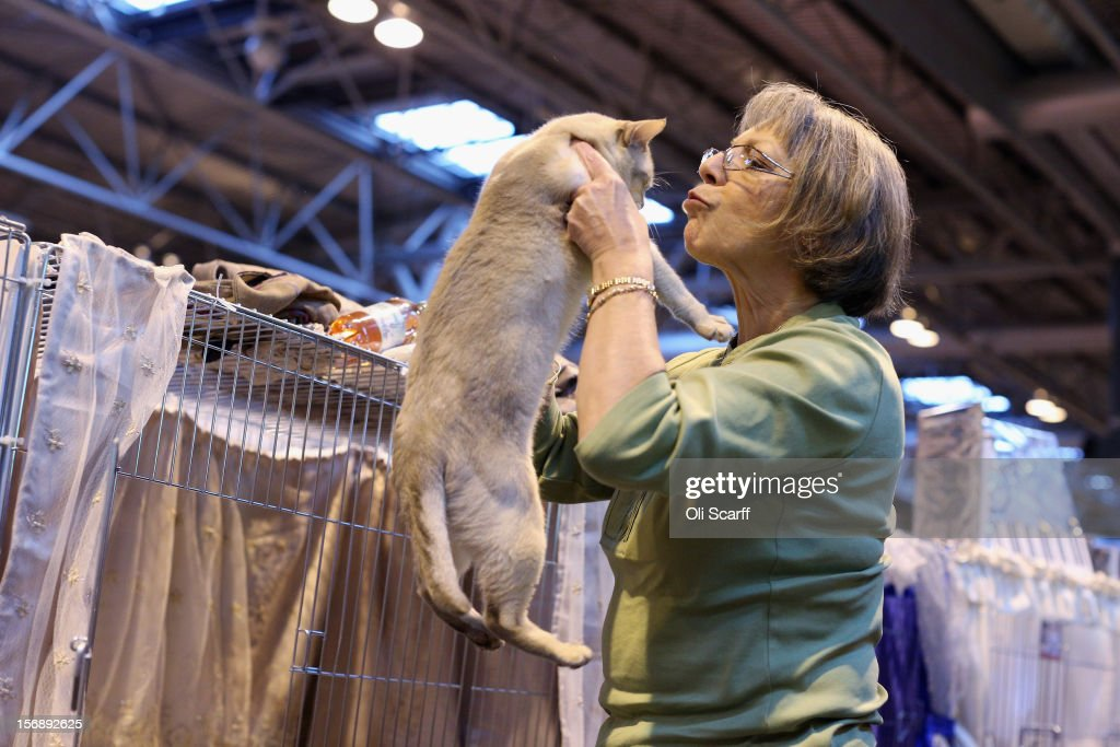 A woman kisses her cat at the Governing Council of the Cat Fancy's 'Supreme Championship Cat Show' held in the NEC on November 24, 2012 in Birmingham, England. The one-day Supreme Cat Show is one of the largest cat fancy competitions in Europe with over one thousand cats being exhibited. Exhibitors aim to have their cat named as the show's 'Supreme Exhibit' from the winners of the individual categories of: Persian, Semi-Longhair, British, Foreign, Burmese, Oriental, Siamese.