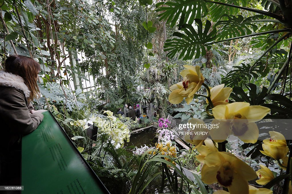 A woman look, on February 21, 2013, at flowers of the 'Mille et une orchidees' (1,001 orchids) exhibition organized at the Jardin des Plantes in Paris from February 22 to March 23, 2013. All these orchids are part of the Jardin du Luxembourg collection. AFP PHOTO PIERRE VERDY