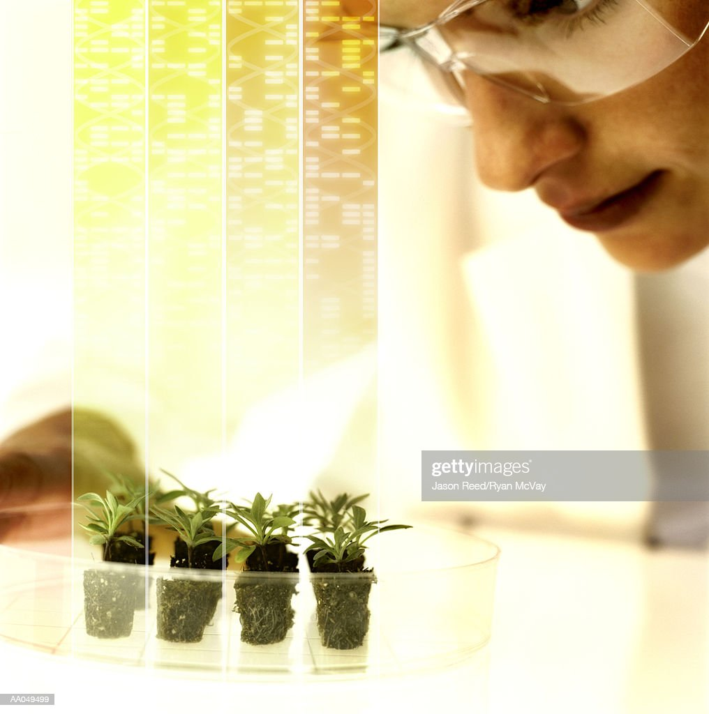 Woman looking at seedlings digital composite, close-up : Photo
