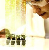 Woman looking at seedlings digital composite, close-up