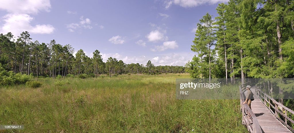 Woman looking at the view from a wooden walkway in a swamp sanctuary in Florida.