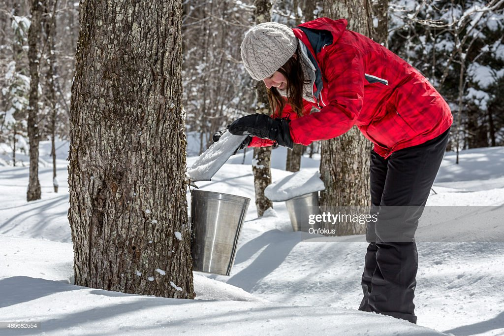 Woman Looking Inside Bucket Collecting Sap at Sugar Shack