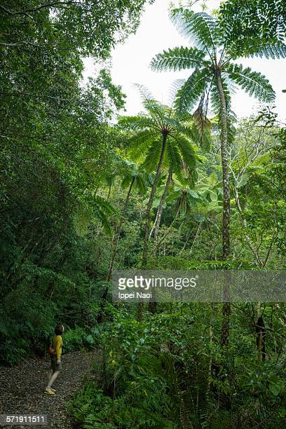 Woman looking up at tree ferns in jungle, Japan