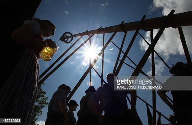 A woman looks on as men in traditional Bavarian dress erect a maypole on May 1 2014 in Grossweil near GarmischPartenkirchen southern Germany The...