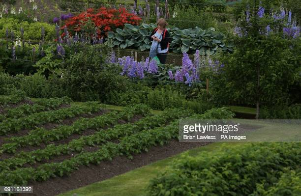 A woman makes her way around the walled garden at the Bloom festival in Dublin's Phoenix Park