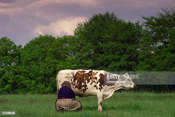 Woman milking cow out in field