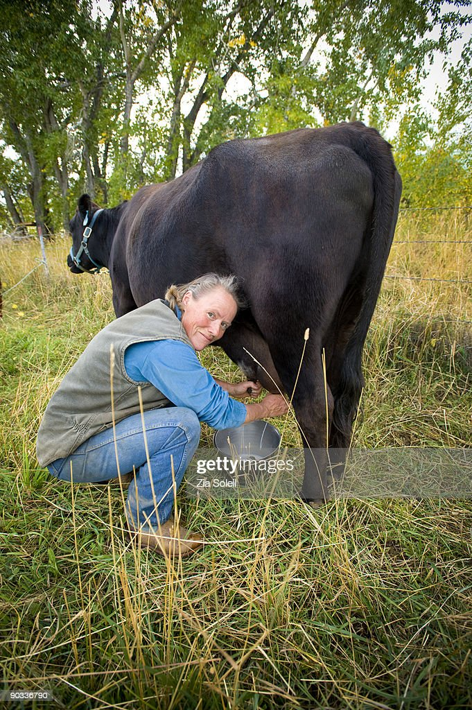 woman milking cow : Stock Photo