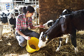 Woman on a farm feeding the calves