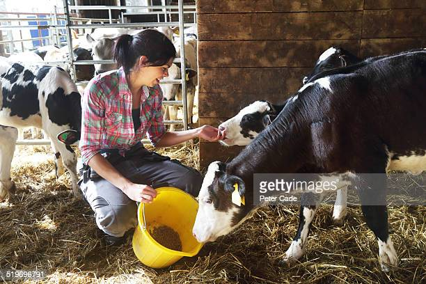 Woman on a farm feeding the calves