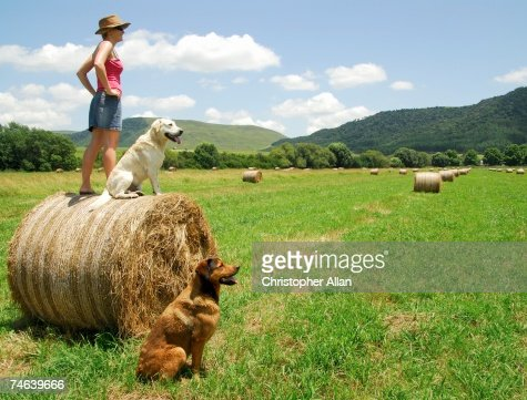 Woman on a South African farm Standing on a Round Straw Bail with Dogs Beside Her