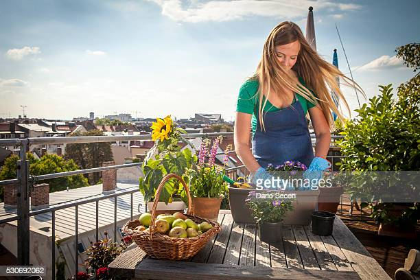 Woman On Balcony Planting Up Flower Box, Munich, Bavaria, Germany, Europe
