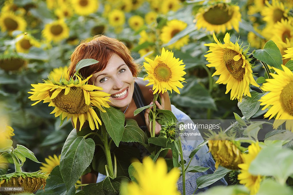 sunflower field picture blooming - photo #25