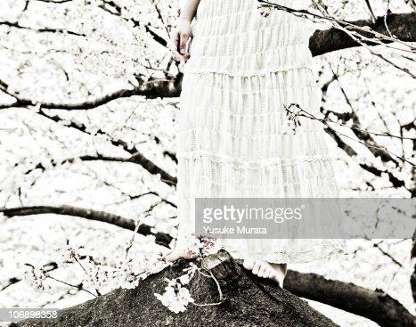 Woman on cherry tree : Stock Photo