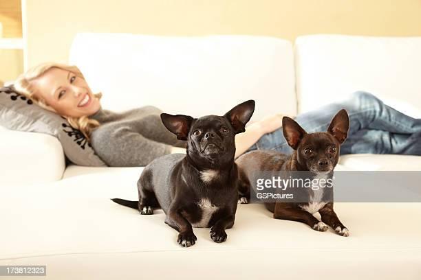 Frau auf Sofa mit zwei chihuahuas in den Vordergrund