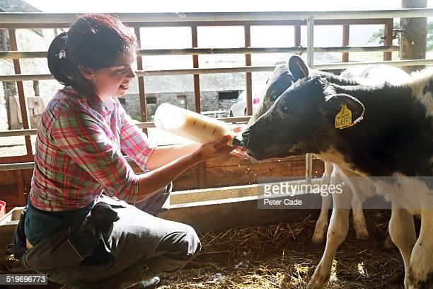 Woman on farm bottle feeding calves