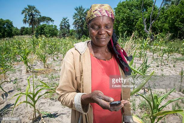 Woman on phone in corn field
