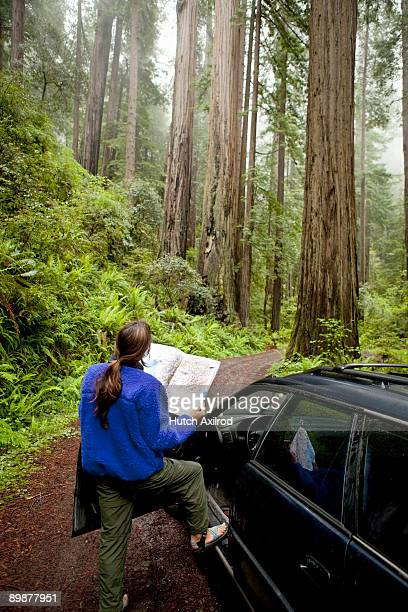Woman on Road through in old Growth Redwood Forest