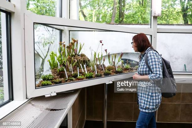A woman participates in the Exhibition of Carnivorous Plants 'Wystawa Roslin Miesozernych 2017' on May 14 2017 in Botanical Garden of Warsaw...