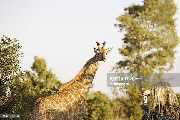 Woman photographing a giraffe
