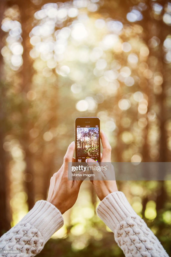Woman photographing trees through smart phone