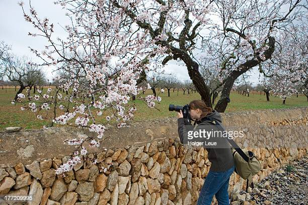 Woman photographs almond tree blossoms