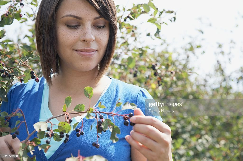 Woman picking blueberries : Stock Photo