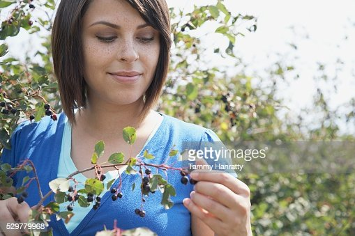 Woman picking blueberries : Stockfoto