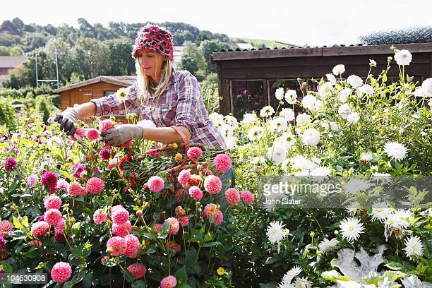 woman picking flowers from cutting garden