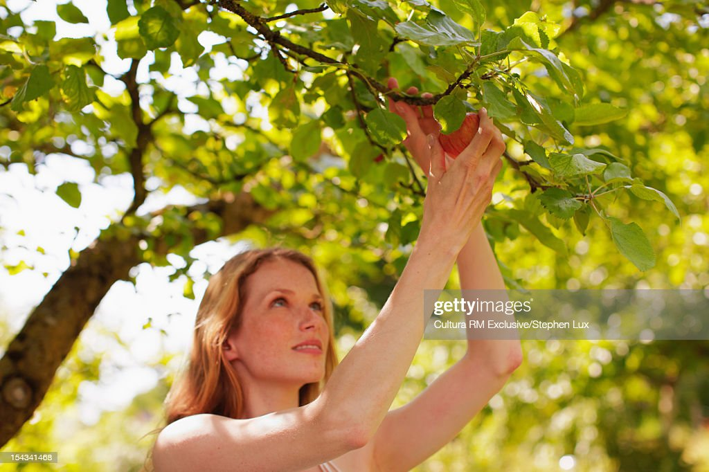 Woman picking fruit from tree