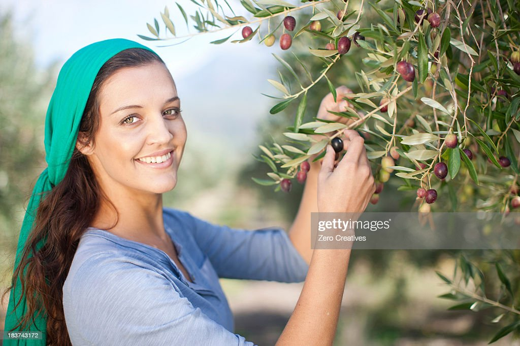 Woman picking olives  in olive grove, portrait