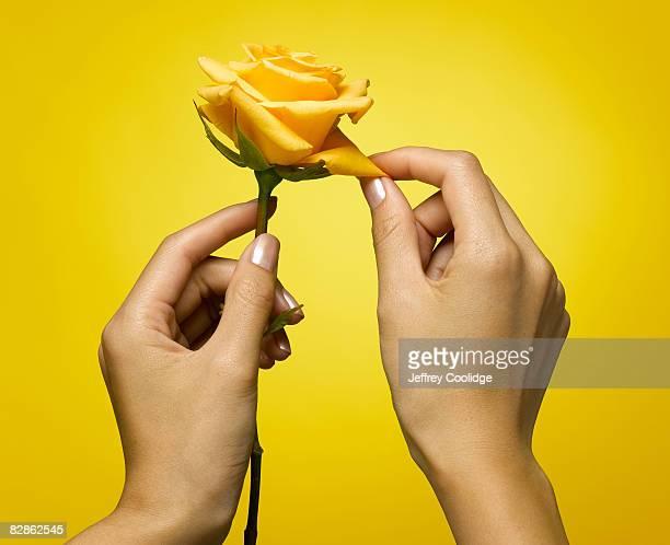 woman picking petal from rose