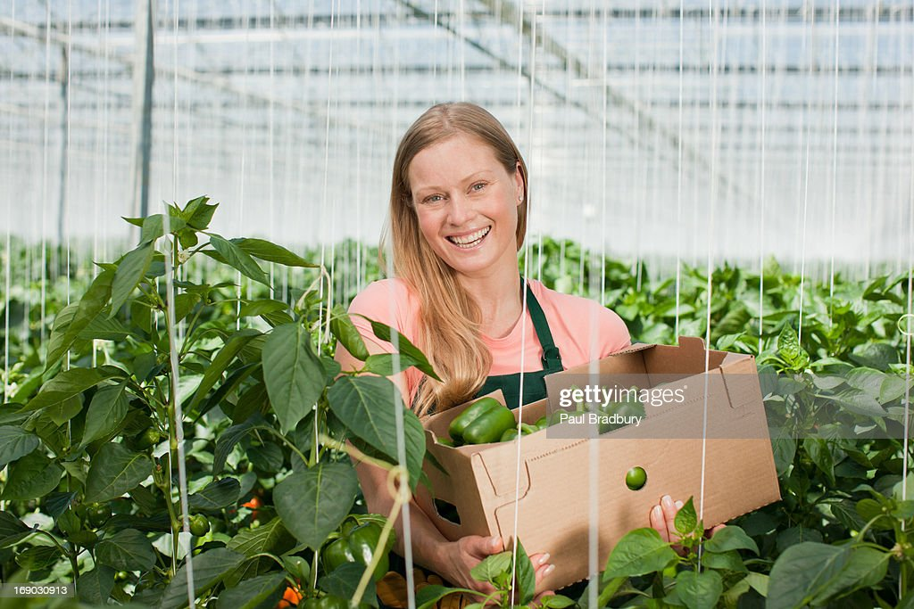 Woman picking produce in greenhouse