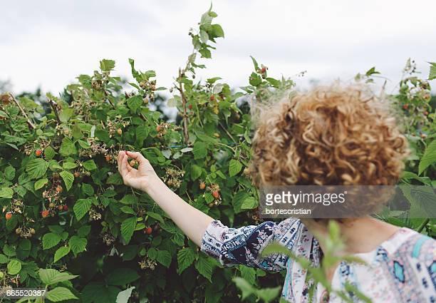 Woman Picking Ripe Strawberries